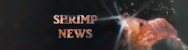 header-shrimpnews